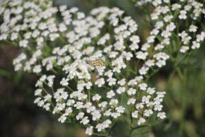 fleurs_bd