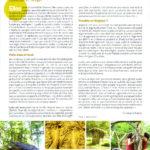 Article symbiose